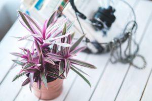 szobanövény-2